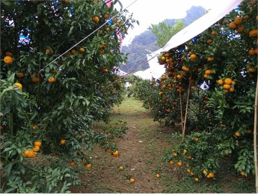 Chuyến công tác thực tế tại tỉnh Cao Bằng
