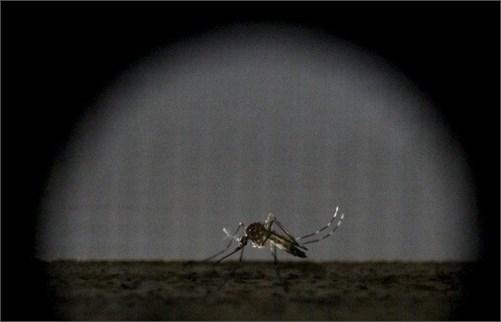 Việc phát hiện muỗi từ rất xa sẽ giúp con người có biện pháp phòng vệ kịp thời trước mầm bệnh