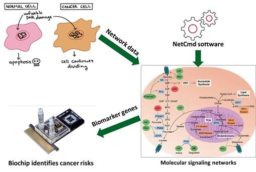 Giảng viên Đại học Công nghiệp Hà Nội công bố phương pháp xác định các gene chỉ dấu ung thư từ dữ liệu mạng tín hiệu tế bào người